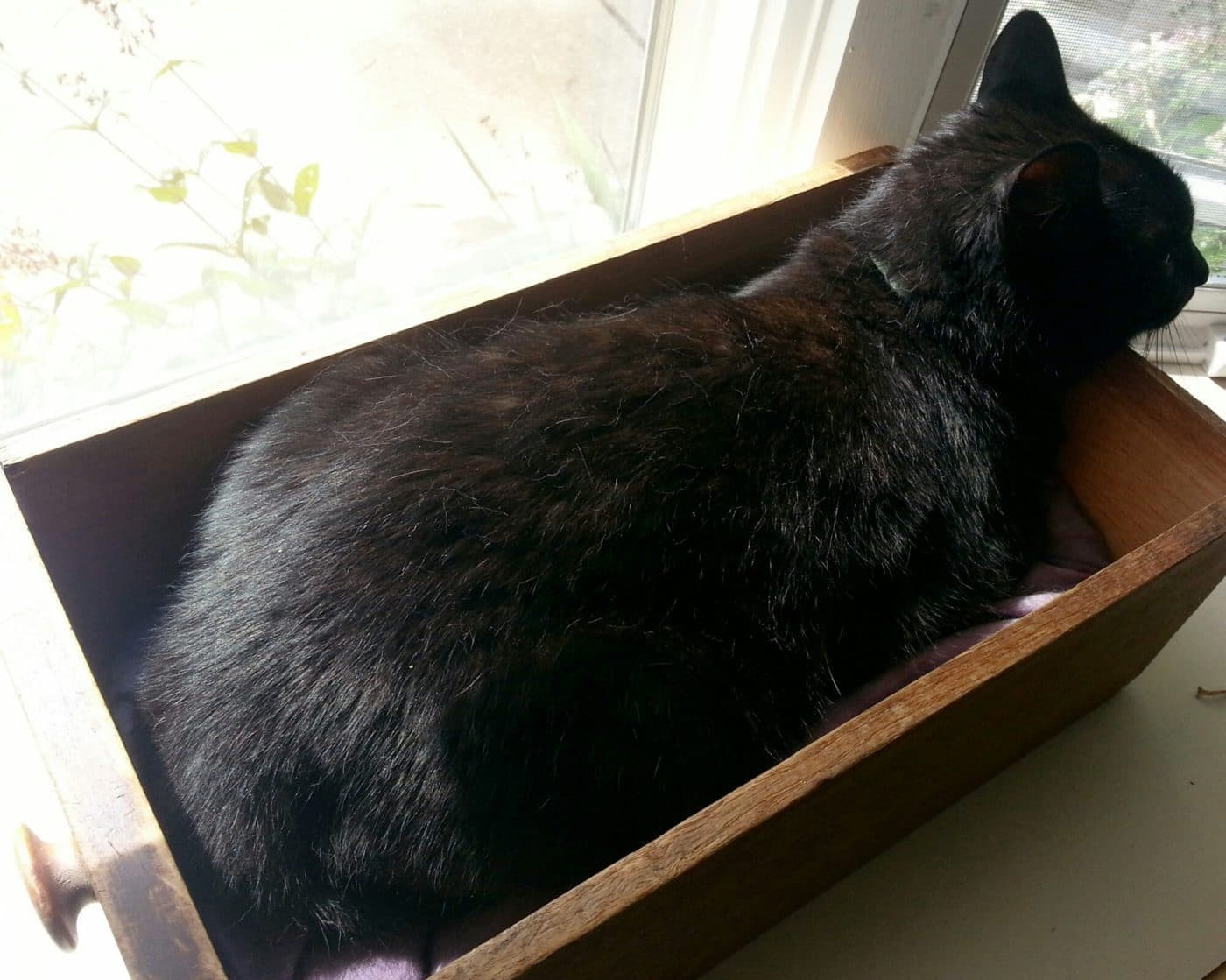 Lilo sleeping in a drawer on a windowsill