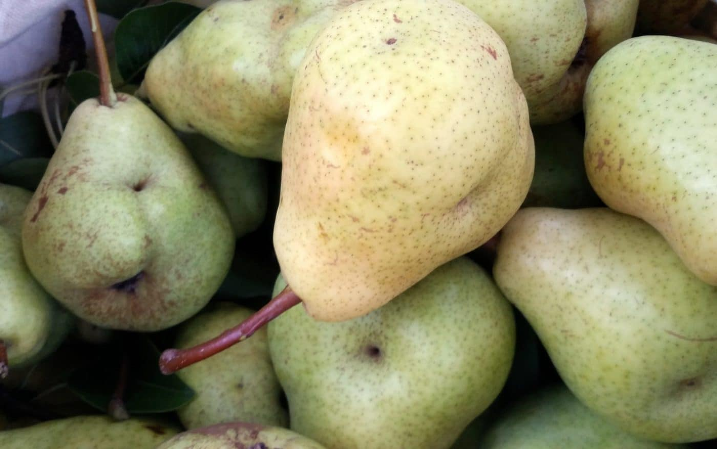fresh-picked pears